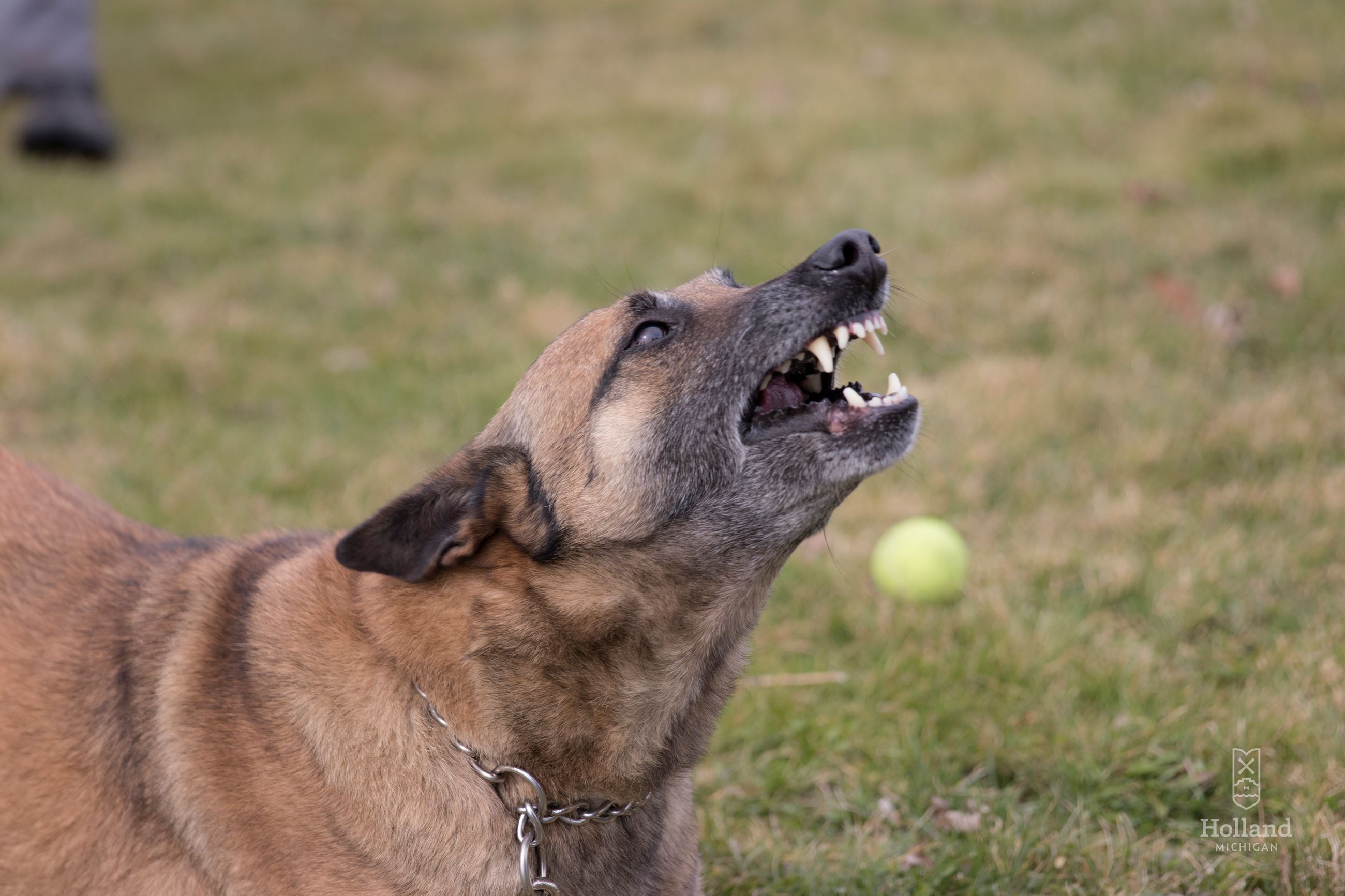 Dog Showing Their Teeth